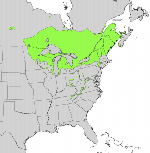 Thuja_occidentalis_range_map