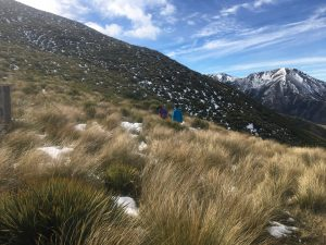 Alpine grassland vegetation east of Castle Hill, South Island, New Zealand